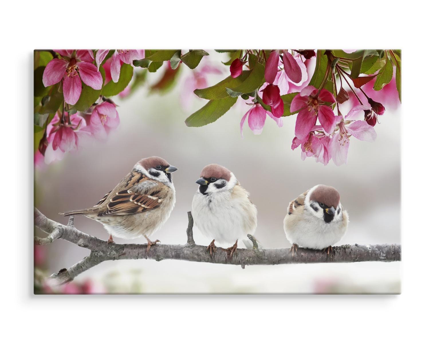 leinwand bild canvas wandbild kunstdruck xxl vögel spatzen